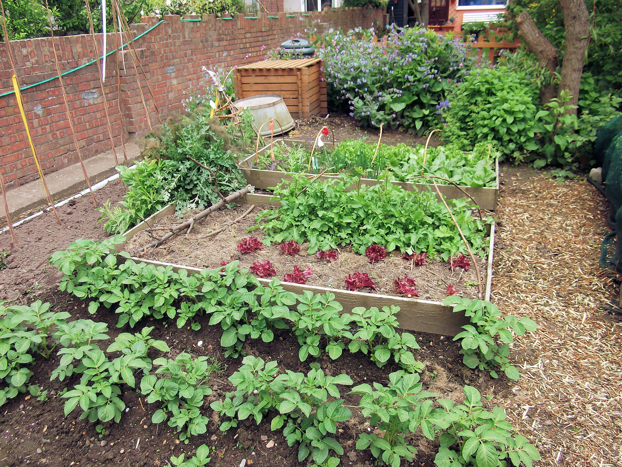 Learning how to start your own vegetable garden will liberate you from rising food prices, so start today ... photo by CC user brighton on Flickr
